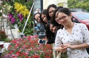 Hà Nội: Nhầm lịch tổ chức lễ hội hoa anh đào, hàng trăm chị em ngậm ngùi 'check in' quanh hàng rào