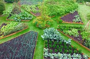 Khu vườn cổ tích đẹp như trong tranh vẽ của hai chàng trai yêu thích trồng rau, nuôi gà từ bé