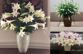 Tháng Tư ngất ngây với mùa hoa loa kèn và những cách cắm đẹp lung linh mê hồn