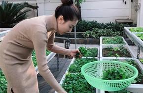 Vườn rau sạch được trồng trên sân thượng biệt thự tiền tỷ của Nữ hoàng sắc đẹp Toàn cầu Ngọc Duyên