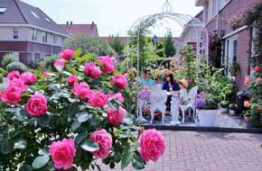 Mê mẩn vườn hồng rực rỡ sắc hương đẹp không khác gì một bức tranh của mẹ Việt ở Hà Lan