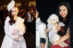 Trước Đức Phúc, đã có Angela Phương Trinh và Minh Hằng cũng bế chó lên thảm đỏ
