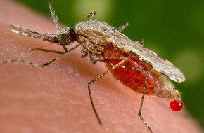 Chỉ là muỗi đốt thôi nhưng có thể gây ra tới 5 căn bệnh nguy hiểm này