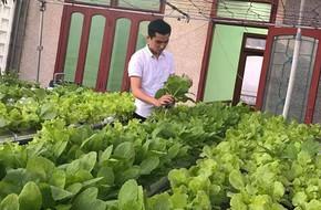 Vườn thủy canh bạt ngàn rau quả trên sân thượng thu hoạch đến gần 100kg mỗi vụ của chàng sinh viên kinh tế 9x