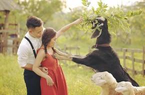 Đang chụp ảnh cưới ở thảo nguyên hoa, cô dâu Hà Nội sững người vì dê xồm xông vào