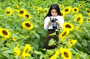 Những ngày mùa đông này, đã có khu vườn ngàn mặt trời nhỏ ở Hà Nội cho chị em chụp ảnh làm vui