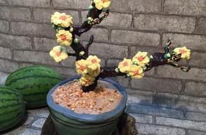 Tết này trang trí nhà bằng chậu hoa mai tự làm cực đẹp lại còn ăn được chứ!