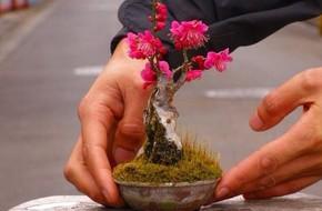 Ngất ngây với 15 chậu hoa bonsai mini siêu đẹp để trang trí nhà dịp Tết
