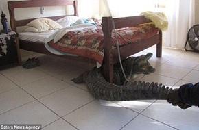 Những thứ kỳ quái được phát hiện... dưới gầm giường