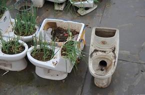 Sốc với vườn rau trồng trong bồn cầu vệ sinh trên sân thượng