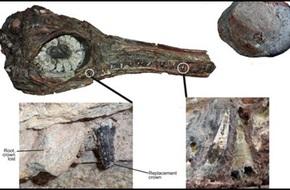 Bất ngờ phát hiện hóa thạch của loài bò sát biển có 4 lỗ mũi