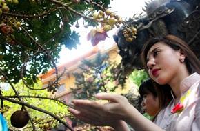 Ngày Vu Lan, người dân đứng chờ hàng giờ hứng hoa sa la rụng