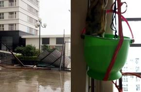Hà Nội: Sống ở chung cư vẫn phải méo mặt chịu cảnh nước lênh láng, tôn bay tứ tung mùa mưa bão