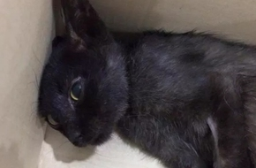 Hà Nội: Cô gái bị tố bỏ đói chú mèo liệt 1 tháng, thản nhiên nói