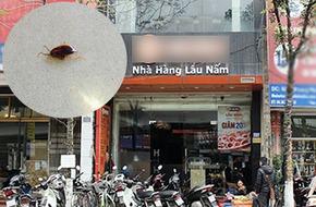 Hà Nội: Đi ăn lẩu nấm, đoàn khách 30 người tá hỏa khi gián