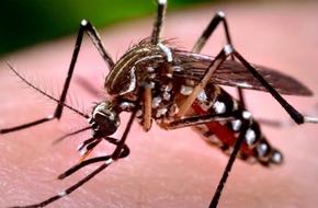 Phát hiện cá thể muỗi ở Việt Nam nhiễm virus Zika