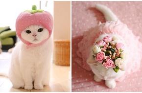 """Ngắm vẻ """"sang chảnh đúng mực"""" của nàng mèo hot nhất Nhật Bản"""