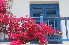 12 loại hoa nếu trồng ở ban công sẽ khiến hàng xóm