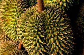 9 lợi ích sức khỏe từ trái sầu riêng