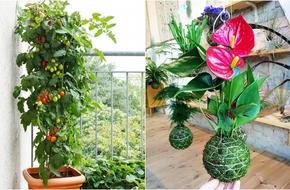 12 ý tưởng 'nhỏ mà có võ' để tha hồ làm vườn trong nhà nhỏ