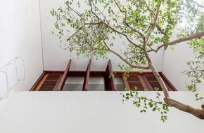 Ngôi nhà ống 30m² trong ngõ vừa sáng vừa thoáng lại nhiều cây xanh ở Hà Nội
