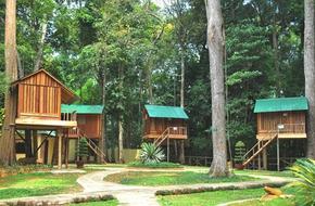 Muốn du lịch mới mẻ hãy quên resort, khách sạn đi để ở 3 ngôi nhà trên cây này!