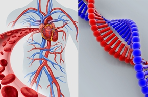 Bạn hoàn toàn có thể mắc phải 5 nhóm bệnh này do di truyền từ bố mẹ mà không hề hay biết