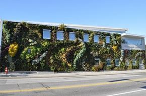 Choáng ngợp với ngôi nhà sở hữu vườn cây xanh trùm kín tường
