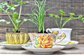 Tận dụng tách trà cũ để tạo nên những khu vườn mini đẹp đến bất ngờ