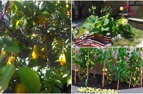 Những khu vườn ở Mỹ bạt ngàn hoa trái Việt Nam của người nổi tiếng