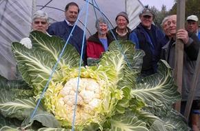 Cây súp lơ khổng lồ nặng 27,5 kg
