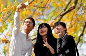 Hà Nội: Cây lộc vừng ra lá vàng rực cả một góc Hồ Gươm