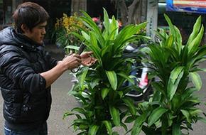 Những loài cây hấp thu khí độc, nên trồng trong nhà