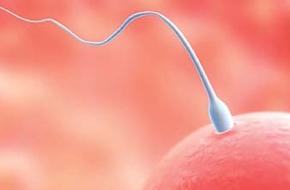 Thời kì rụng trứng và khả năng thụ thai thành công