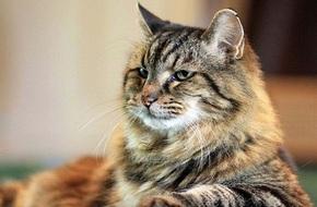 Chú mèo 121 tuổi già nhất thế giới sở hữu lượng fan