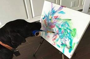 Chú chó biết vẽ tranh, kiếm tiền khủng cho chủ