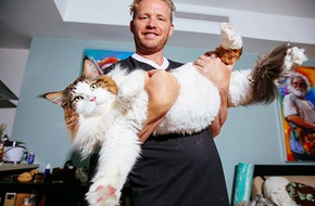Ai bảo chỉ có mèo con mới xinh yêu, xem chú mèo