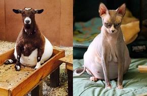 Xem những hình ảnh này mới thấy bà mẹ mang thai nào cũng vất vả kể cả động vật
