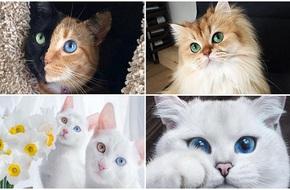 Những chú mèo