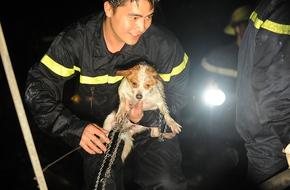 Hà Nội: Chú chó được cứu sống sau một giờ mắc kẹt trong đám cháy tại cửa hàng sofa