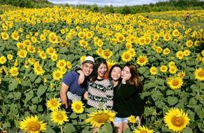 Cánh đồng hoa hướng dương đẹp ngất ngây tại Đà Lạt