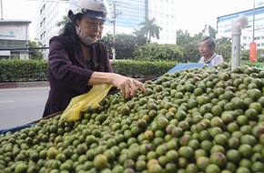 Sấu cuối mùa 50 ngàn/kg ngập tràn lề đường Sài Gòn
