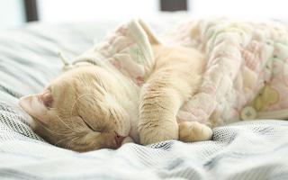 Buồn ngủ quá!