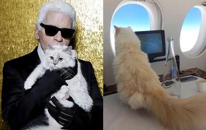 """Gặp gỡ """"cô mèo"""" cưng sang chảnh,  tình yêu đích thực của Karl Lagerfeld, được thừa kế khối tài sản bạc tỷ"""