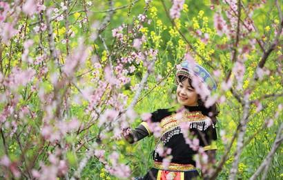 Đẹp mê mẩn thiên đường hoa đào tại xứ sở ngàn mây Sun World Fansipan Legend