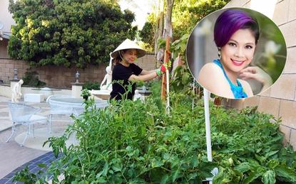 """Cận cảnh khu vườn toàn rau gia vị Việt trên đất Mỹ của """"búp bê"""" Thanh Thảo"""
