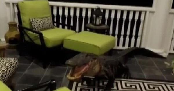 Ngủ dậy cả gia đình phát hoảng thấy cá sấu bò lên tận tầng 2 cắn phá