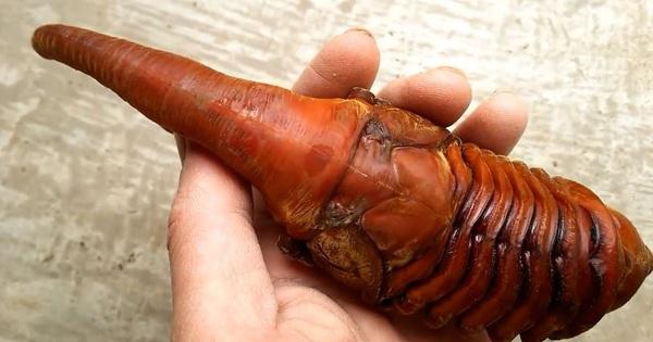 Không phải sinh vật ngoài hành tinh, đây là loài bọ khổng lồ kỳ lạ nhất trên Trái đất