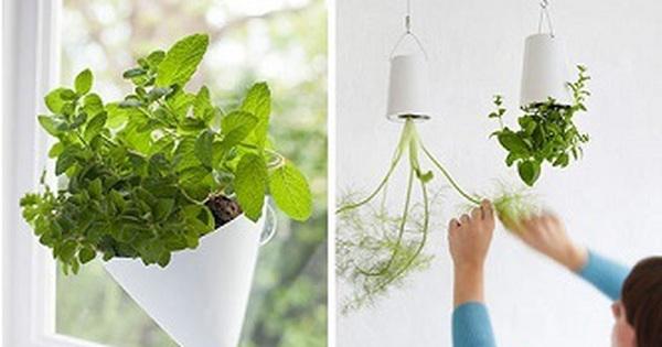 10 cách tạo ra vườn cây gia vị xinh xắn trong nhà phố bất chấp không gian chật hẹp