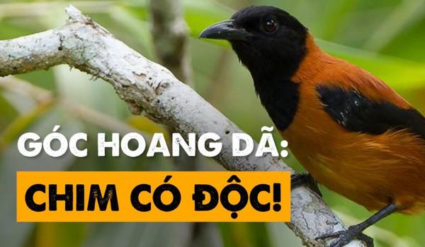 Góc hoang dã: Chim có độc!
